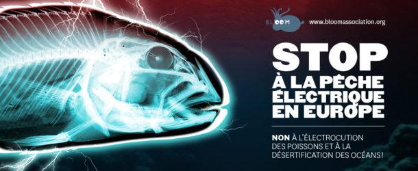 Stop à la Pêche électrique!